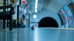 지하철에서 생쥐 두 마리가 음식 두고 싸우는 장면이