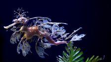 サンディエゴ水族館の品種の珍しい海龍