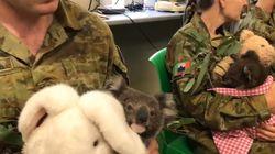 호주 군인들이 휴식 시간 마다 코알라에게 달려가고