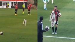 축구 경기 난입한 개가 그라운드를 휘젓고 퇴장당했다