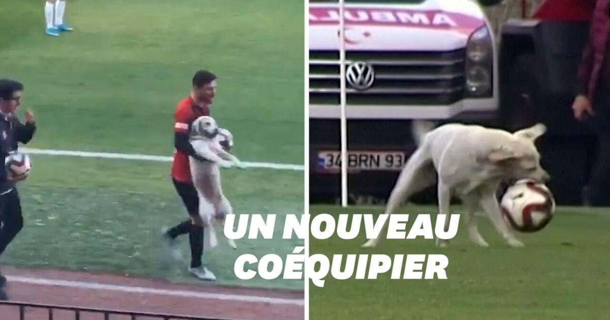 Ce chien a débarqué en plein match de foot et il avait très envie de jouer