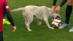 Un perro salta al césped durante un partido de fútbol para jugar con la