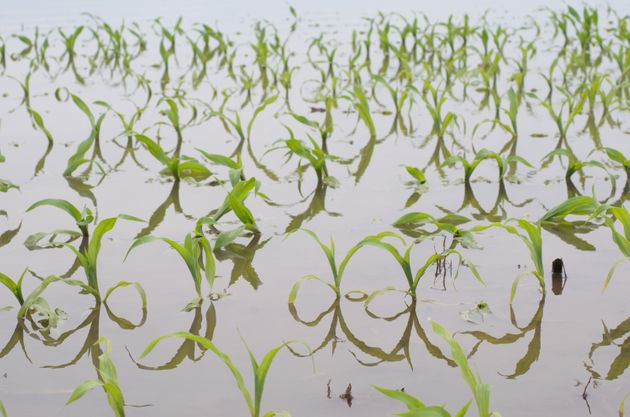 Flooding in the Midwest can have devastating consequences on