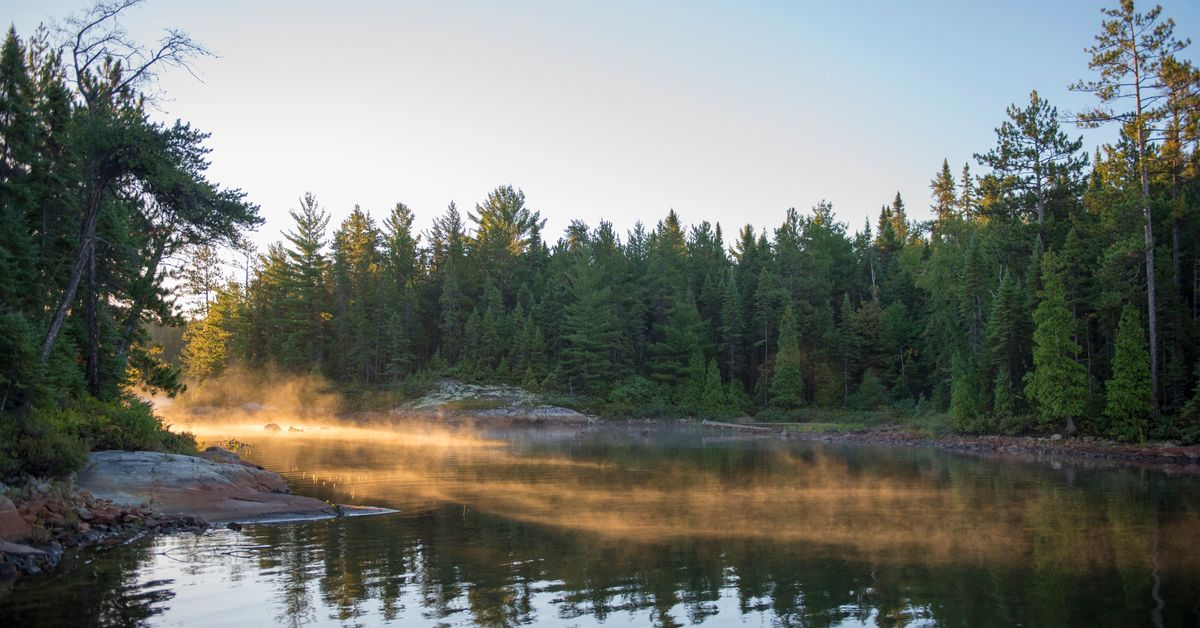Ontario Faces Lawsuit For Not Considering Climate Impacts In Logging Plan