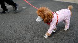 중국 충칭서 살균제 남용으로 야생동물들이 집단
