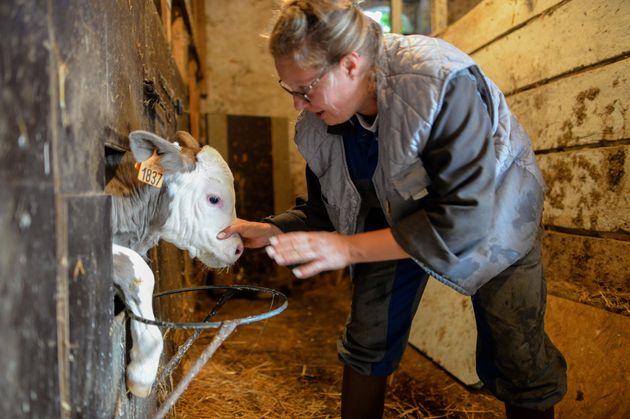L'agricultrice Stella R. s'occupe d'un jeune veau dans sa ferme d'Argentre, près de Laval, le...