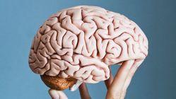 Un cerveau humain trouvé dans un camion