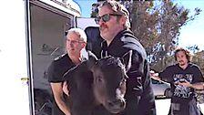 Joaquin Phoenix Feierte Oscar Mit Bewegenden Rettung Der Kuh Und Ihr Kalb