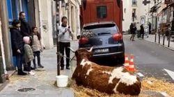 À Paris, cette vache sur le trottoir d'un restaurant n'est pas du goût de tout le