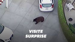 Ces Californiens ont reçu un visiteur inattendu dans leur