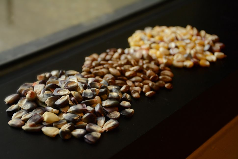 Cherokee Nation seeds destined for the Svalbard Global Seed Vault.