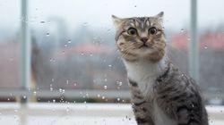 À Rennes, les Insoumis vont présenter un chat aux