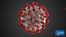 Die Globalen Märkte Stark Fallen Als Coronavirus Breitet Vergangenheit Asien