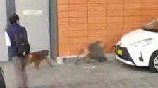 3 Flüchtige Paviane Gefangen In Sydney Nach Dem Amoklauf In Der Nähe Von Krankenhaus