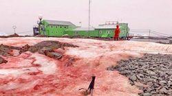 Ανταρκτική: Το χιόνι βάφτηκε κατακόκκινο γύρω από πολικό