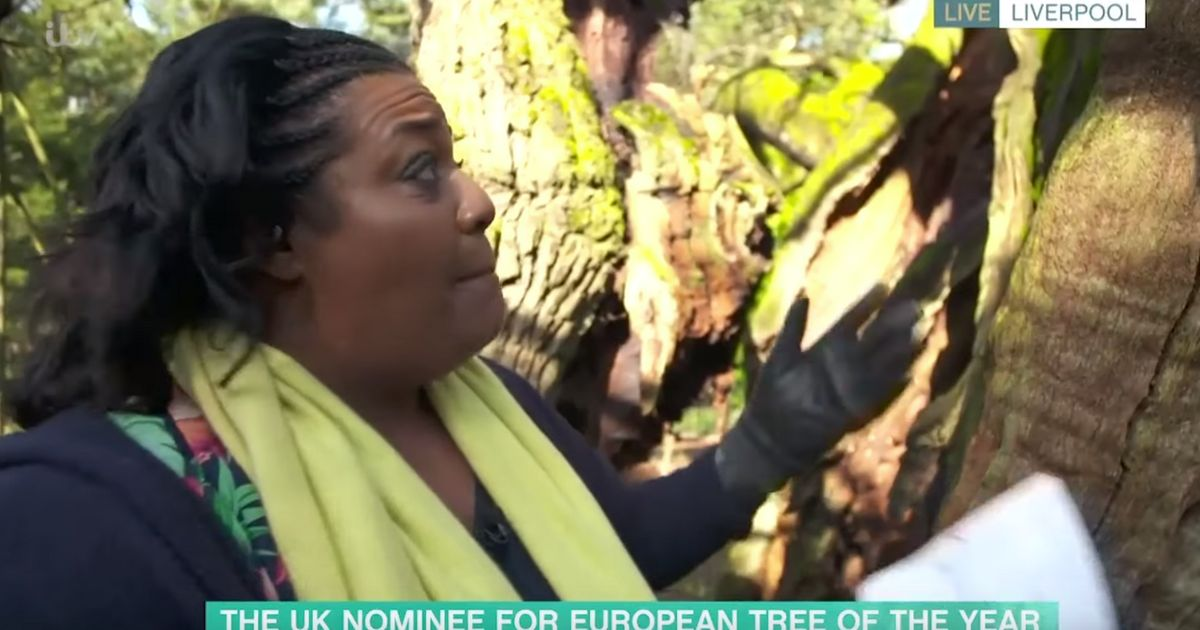 Alison Hammond Interviewing A Tree Is Proof That She Really Can Interview Anyone And It Be Hilarious