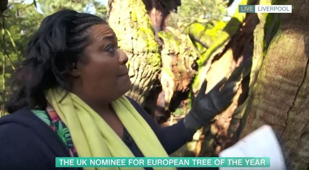 Alison Hammond interviewing a tree on This