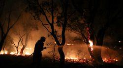 En Australie, des souris tuées par les incendies alors qu'elles étaient à plus de 20