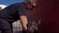 Joaquin Phoenix rescató a una vaca y a su cría el día después de ganar el