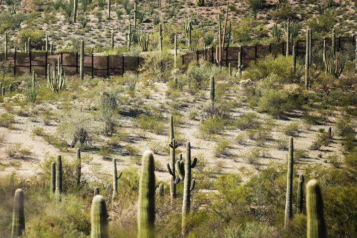 A border fence, surrounded by cacti, is seen at the national monument in 2017. A Border Patrol official has argued that curre