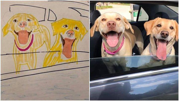 Dogs owned by Jennifer Giera.