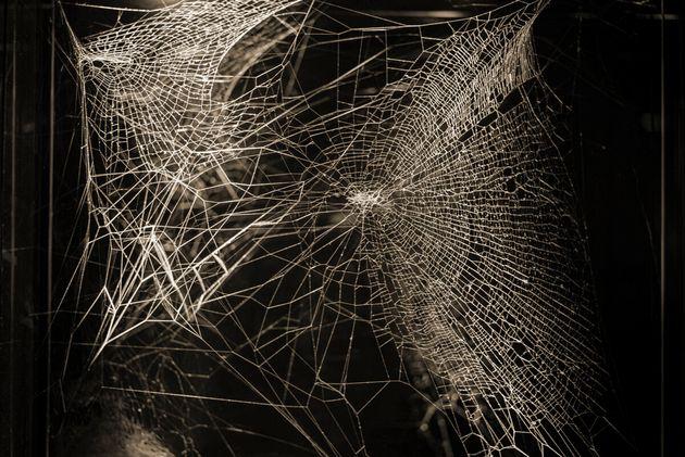 Saraceno usa magistralmente ragno e ragnatele per immergerci in un nuovo