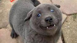 Orso, gatto o cane? Il rarissimo (e buffo) cucciolo che sta incuriosendo il mondo