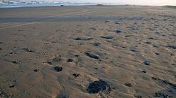 La mitad de la playas de arena podrían desaparecer este siglo como consecuencia de la crisis