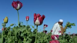 Possibile far pace con i talebani senza una parola