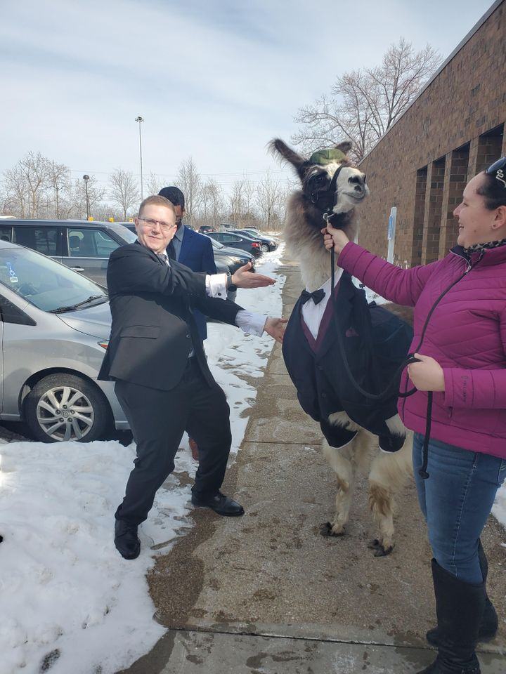 Mendl Weinstock of Cleveland (left) vowed five years ago he'd bring a llama to his sister Riva's wedding. Last weekend, he kept his promise.