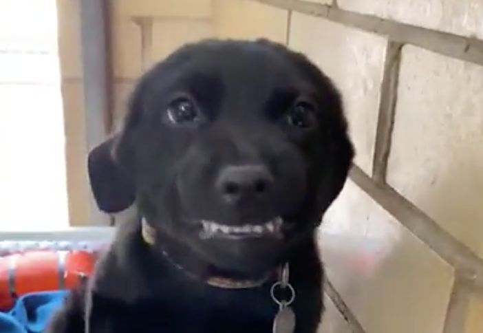 Burreaux went viral for his big smile, which a dog behavior expert said he may have picked up due to positive reinforcement.