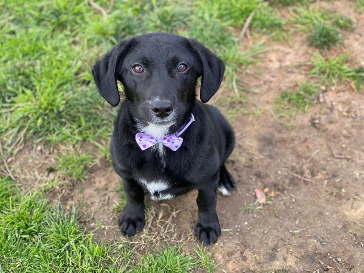 O is still up for adoption.