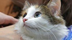 Chennai Wants To Deport A Cat To China Over Coronavirus