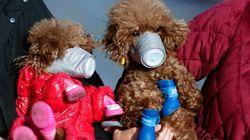 Ενας σκύλος στο Χονγκ Κονγκ είναι η πρώτη περίπτωση μετάδοσης κορονοϊού από ζώο σε