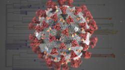 Le coronavirus a déjà muté et c'est plutôt une bonne