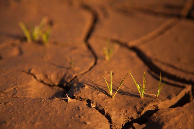 Η φύση όμως, είναι μία από τις λύσεις για την προσαρμογή και τον μετριασμό της κλιματικής