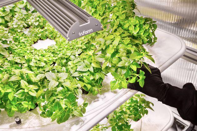スーパーマーケットの中に「農場」を。ドイツの農業ベンチャー「インファーム」が日本上陸