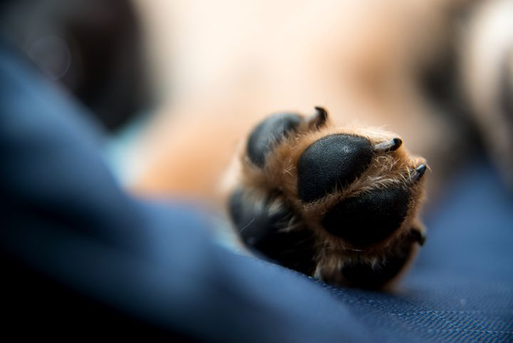 paw of sleeping dog