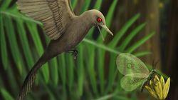 Un nouvel oiseau dinosaure découvert dans de l'ambre (mais on est loin de Jurassic