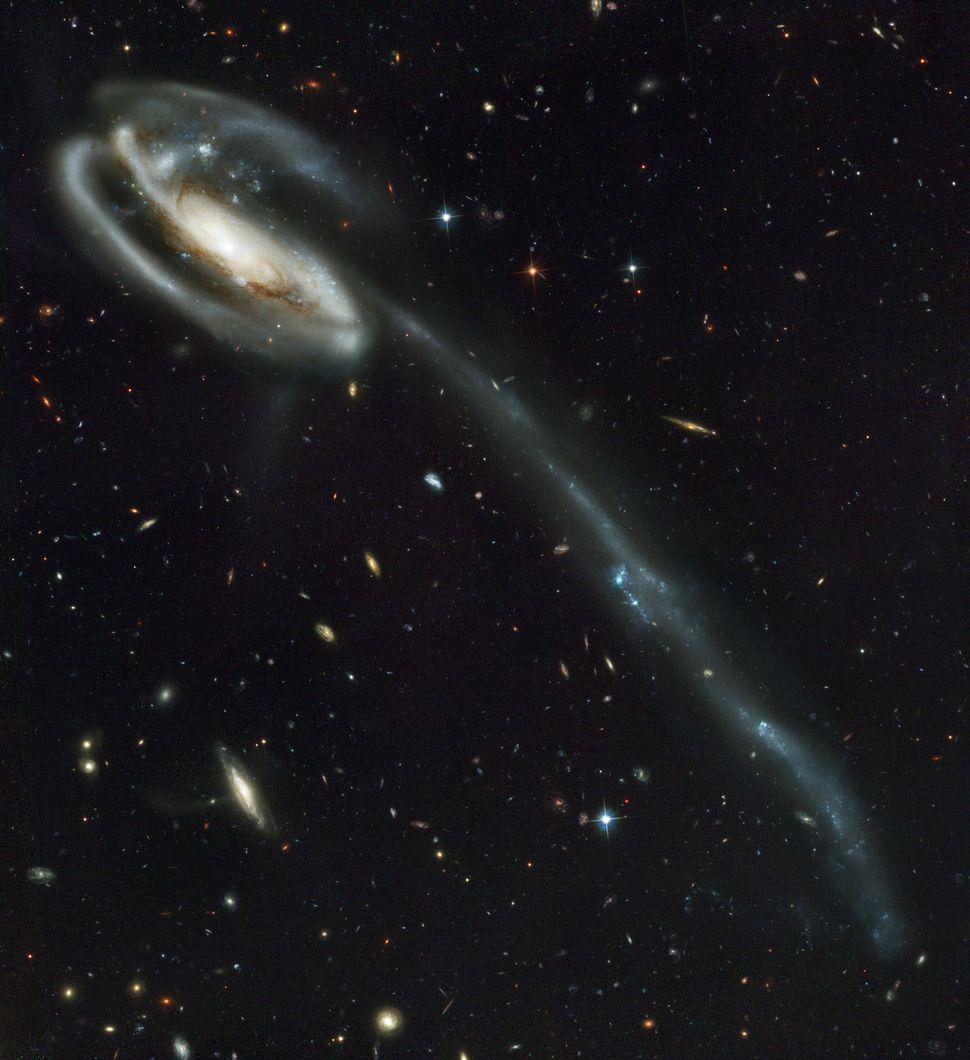 2002: Tadpole Galaxy  Credit: NASA, H. Ford (JHU), G. Illingworth (UCSC/LO), M.Clampin (STScI), G. Hartig (STScI), the ACS Sc