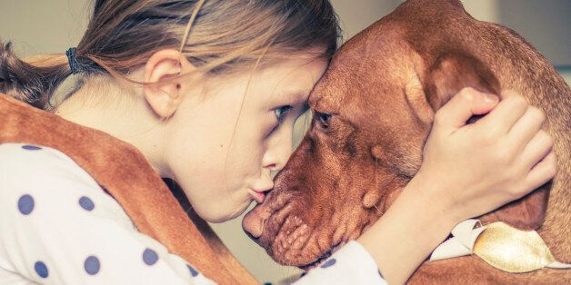 The dog breed is a Hungarian Vizsla.