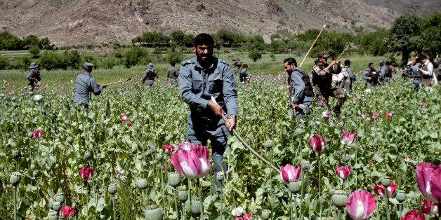 Afghan policemen destroy an opium poppy field in Noorgal, Kunar province, east of Kabul, Afghanistan, Saturday,  April 13, 20