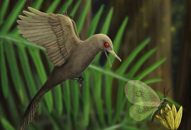 「最も小さい恐竜」とされるオクルデントアビスの想像図(Photo by Zhixin Han / China University of Geosciences / AFP)