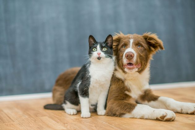 Animal Shelters Call For People To Foster Pets Amid Coronavirus Pandemic Huffpost