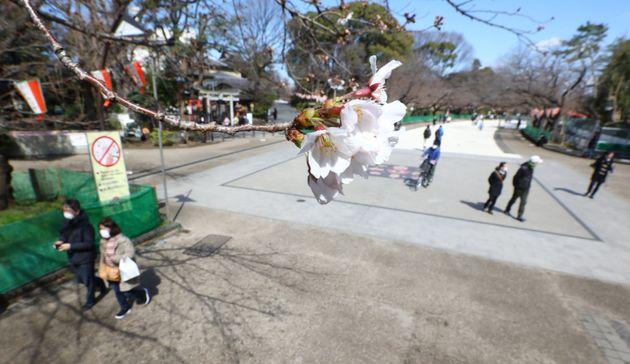 閑散とする上野公園=3月15日、東京都台東区