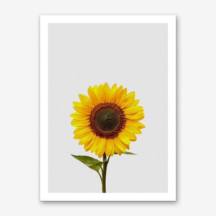 Sunflower Still Life Art Print, Iamfy, £16