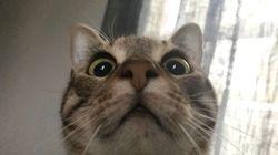 猫たちも一緒に自主隔離。外出できない飼い主たちが、笑える猫画像をシェア