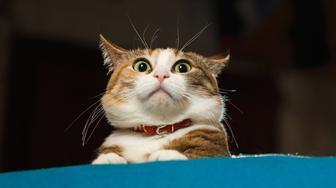 Cat TikTok Accounts