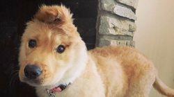 頭のてっぺんに、耳がある子犬 「かわいすぎる」と人気に
