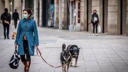 Seis cosas que hacías al sacar al perro y que te pueden costar una multa en el estado de
